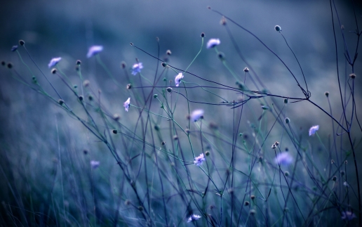 Night Flowers and Grass