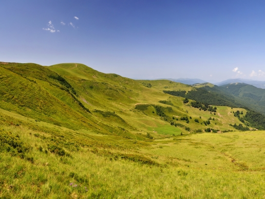 Carpathians Ukraine Mountain Valley with Green Grass