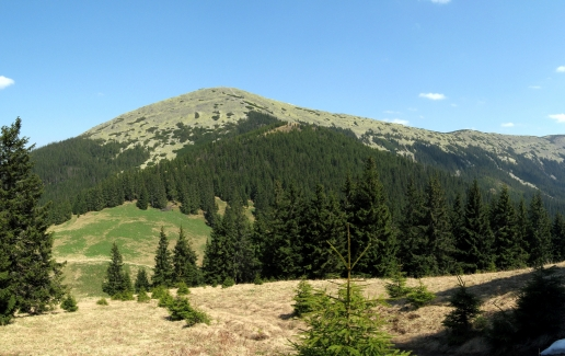Forest Mountain Valley Carpathians in Ukraine